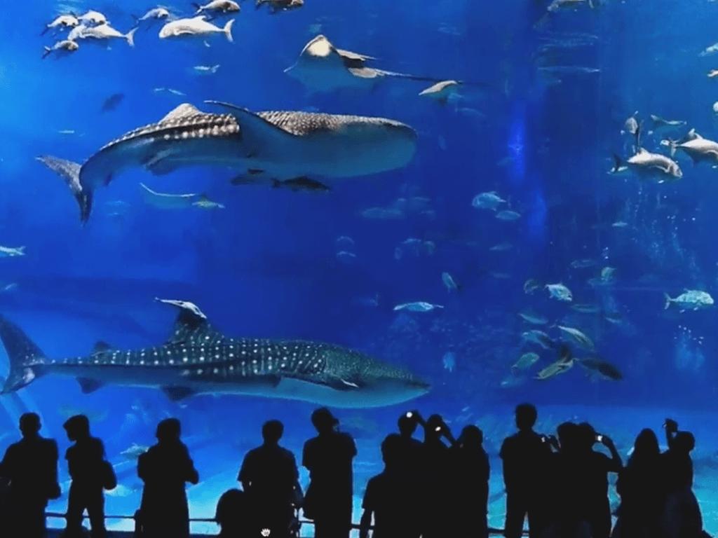 People taking pics in an aquarium