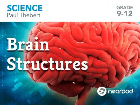 Brain Structures