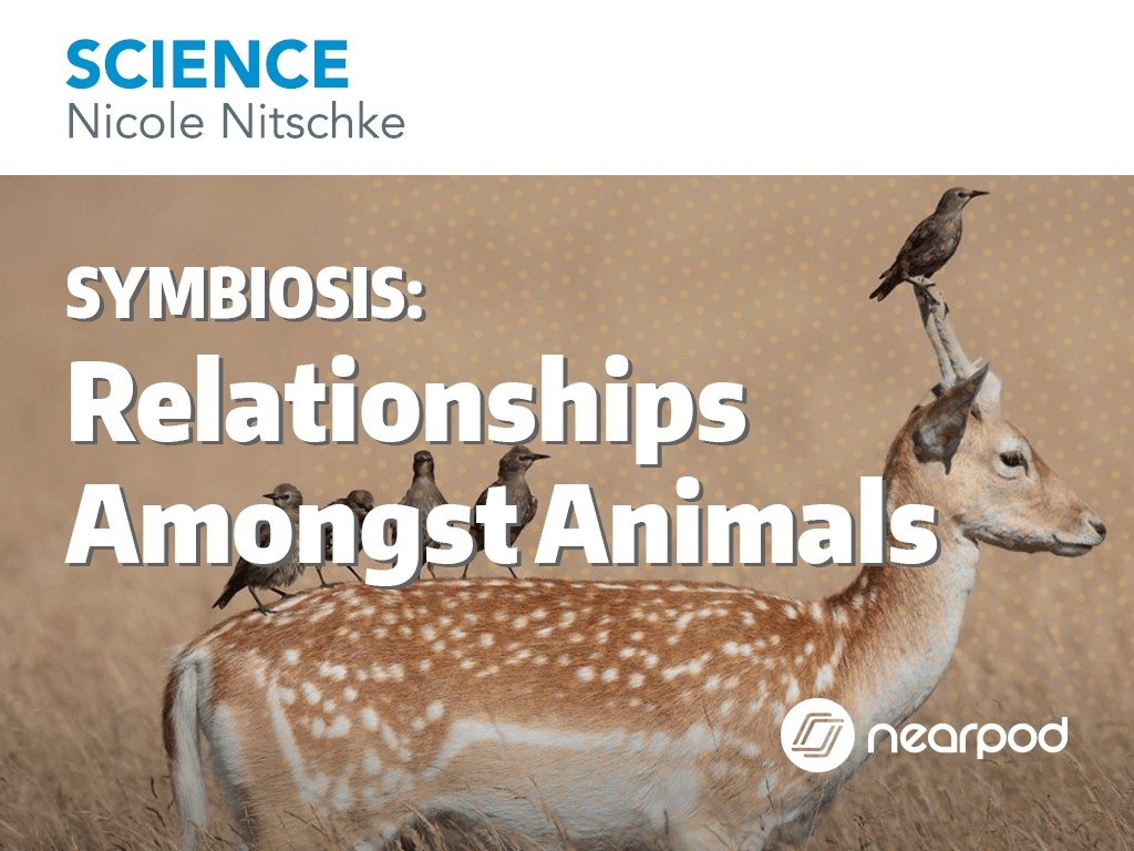 relationships amongst animals