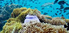 Thumbnail Anemone Reef